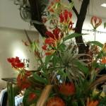Red & Yellow Gloriosa Lillies