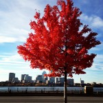 Red Tree on the Charles River