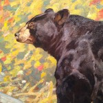 Closeup - American Black Bear - Carl Rungius