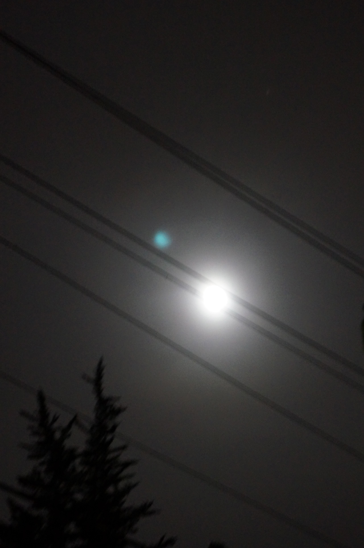 Bear eyes at night - photo#18