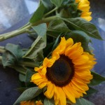 Sunflowers from my weekly CSA box